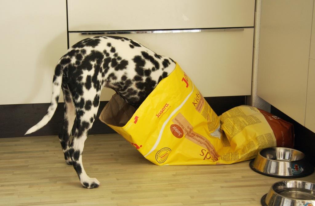 Сухой корм для кошек с избыточным весом Brit Care Daisy I