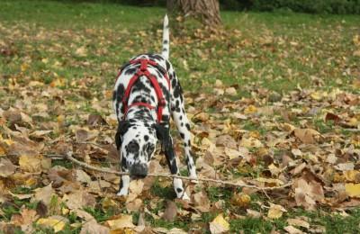 Knabberspaß im Herbst