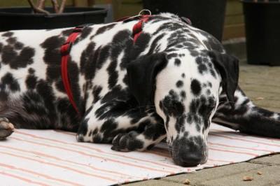 Mehr Entspannung und Auszeit für den Hund
