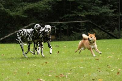Hundespaß zu dritt