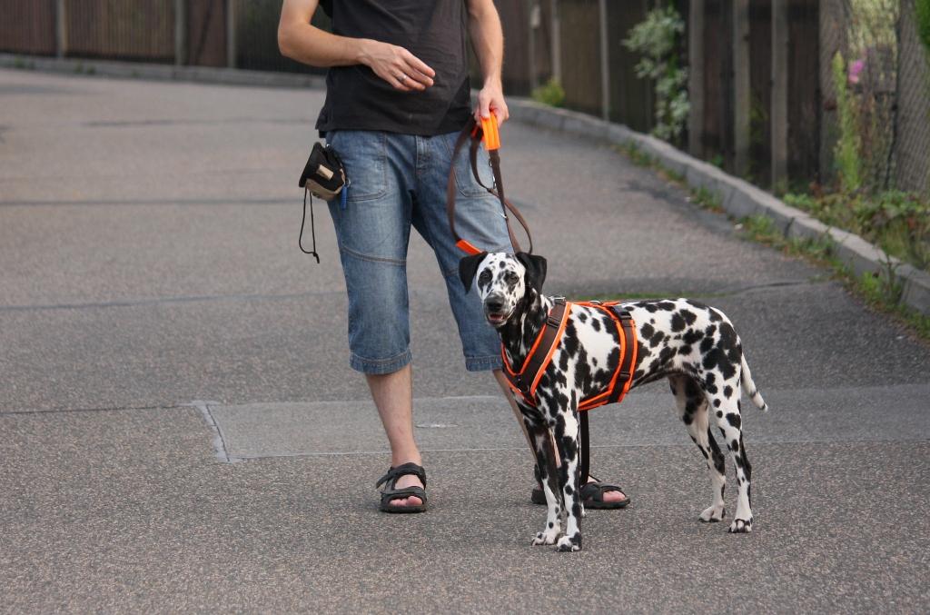 annyx Brustgeschirr Protect & Führleine  DalmiBlog ~ X Geschirr Hund