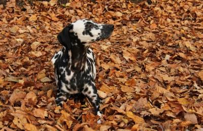 Frischer Herbstwind