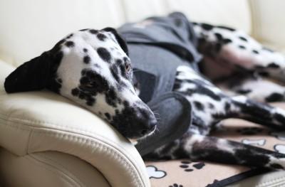 Schlummern auf dem Sofa