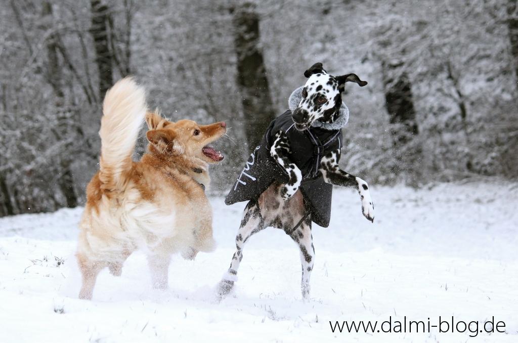 Schneespaß mit Angie und Jack
