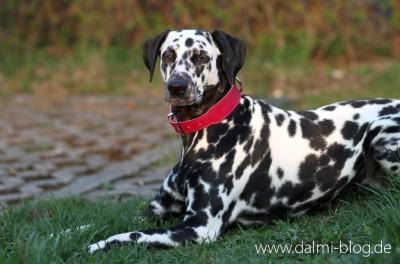 Stylischer Wachhund