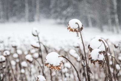 Schneekappen