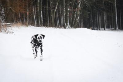 Angie im Schnee