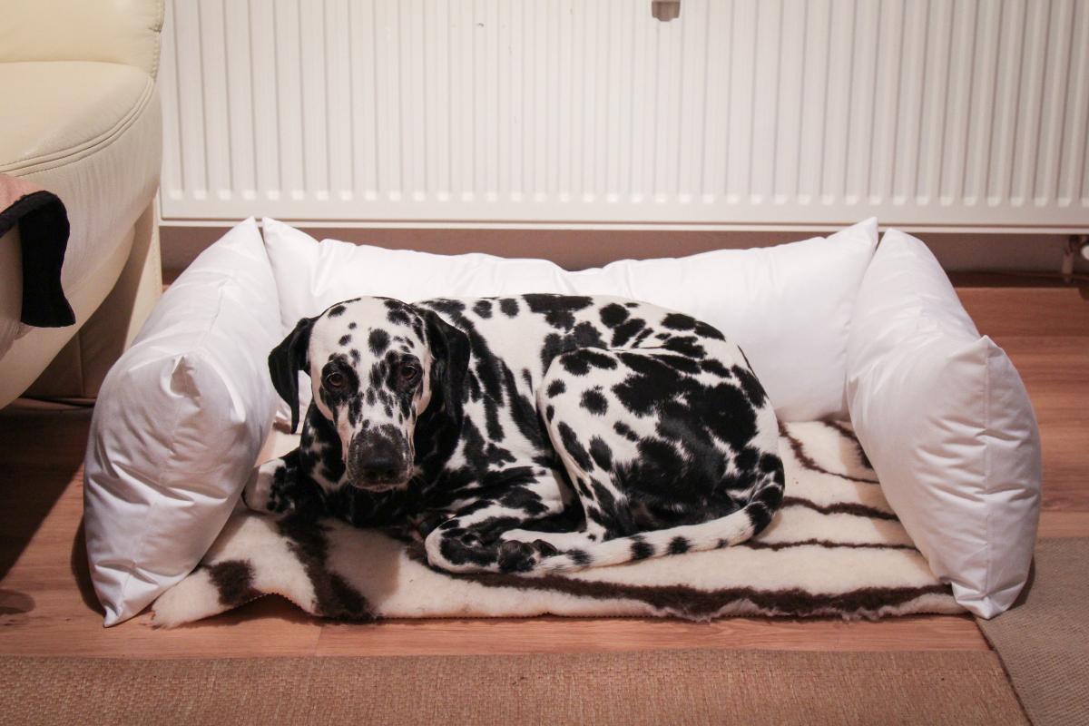 Lieblings Allergiker-Hundebett selber machen: Kochfest & hygienisch - Dalmi-Blog @BN_49