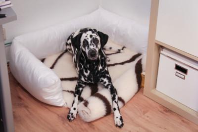 Allergiker-Hundebett für Angie selbst gemacht