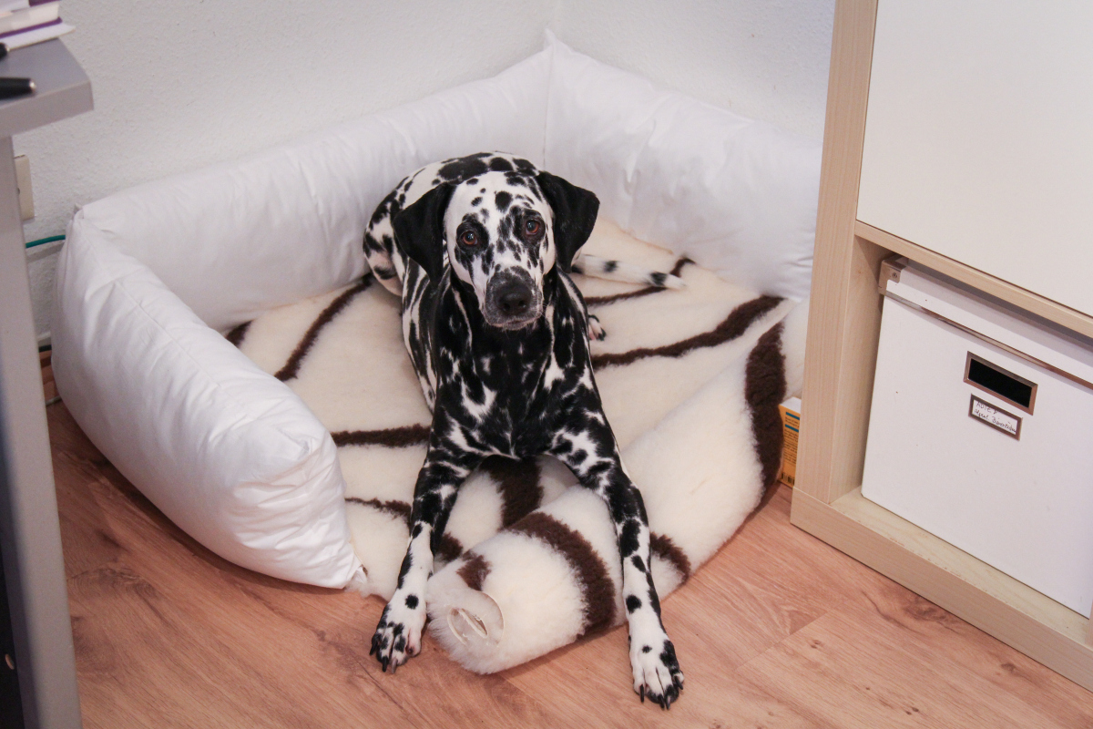 Hundebett Selber Bauen Anleitung allergiker hundebett selber machen kochfest hygienisch dalmi